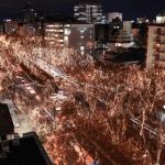 仙台光のページェントの歴史 ケヤキに対して特別な思いを持つ仙台市民!